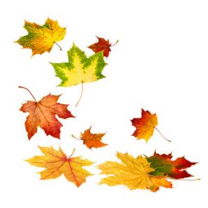 Fallende Herbstblätter auf weiß